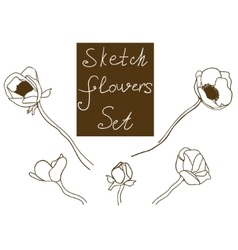 Flower set detailed hand drawn anemones vector image