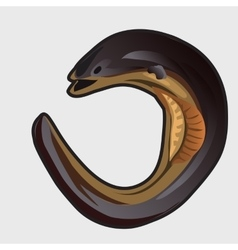 Cartoon fish european eel vector image