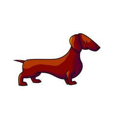 Cute cartoon dachshund vector