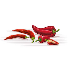 Hot peppers vector