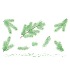 set green pine branch fir tree branch vector image