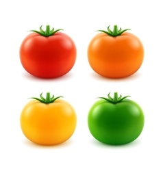 Set of Big Red Orange Green Yellow Whole Tomato vector