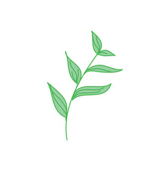 decorative tropical leaf hand drawn vector image vector image