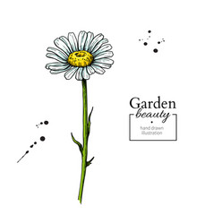 daisy flower drawing hand drawn floral vector image