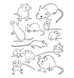 mice line art vector image