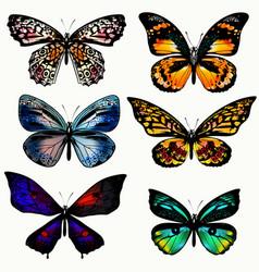 set realistic butterflies vector image