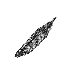 hand drawn indian feather vintage vector image vector image