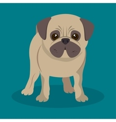 Cute pug doggy standing blue background vector