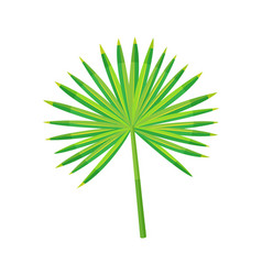 fan green palm exotic plant foliage design vector image