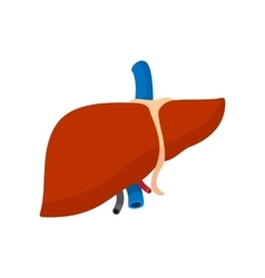 Human liver cartoon icon vector