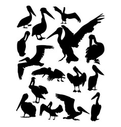 pelican animal detail silhouette vector image