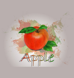 apple watercolor food vector image