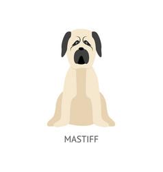 cartoon mastiff dog sitting on floor - flat vector image