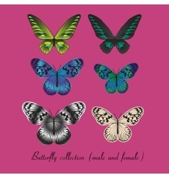 Collection with colorful butterfly vector