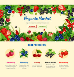 Fruit and wild berry organic food banner template vector