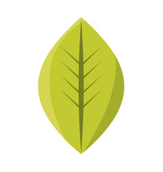 Leaf eco symbol vector