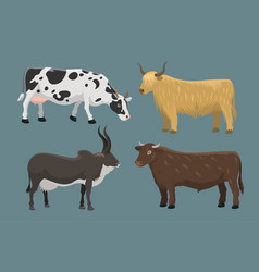 bull and cow farm animal vector image vector image