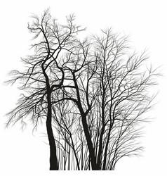 Acacia trees vector