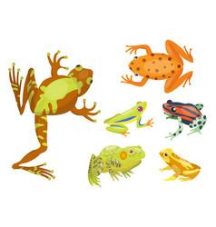 Frog cartoon tropical animal cartoon nature icon vector