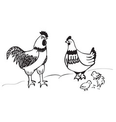 Rooster chicken and chicks vector