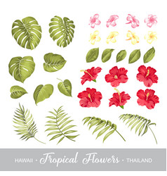 Set of tropical flowers elements collection of vector