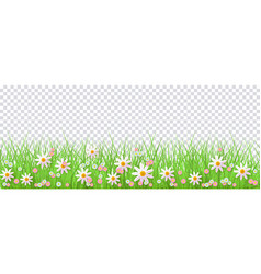 Spring border with green grass and flowers on vector