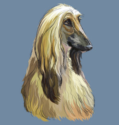 Colorful afghan hound hand drawing portrait vector