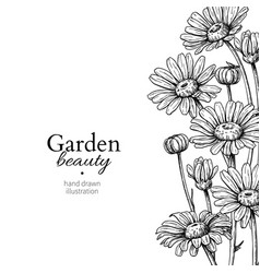 Daisy flower border drawing hand drawn vector