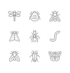 Set line icons insect vector