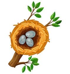 Three eggs in the bird nest vector