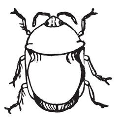 Black bug vintage vector
