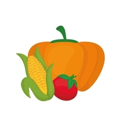 Fresh pumpkin corn and tomato vegetables vector