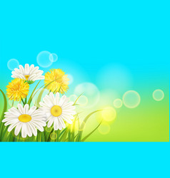 Spring flower daisy juicy chamomiles yellow vector