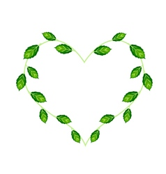 Sweet Basil Leaves and Flowers in A Heart Shape vector image