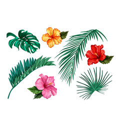 tropical leaf monstera palm hibiscus set vector image vector image