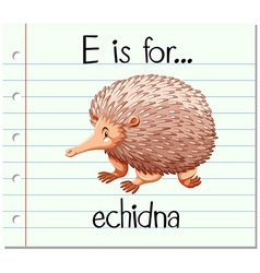 Flashcard letter E is for echidna vector image vector image