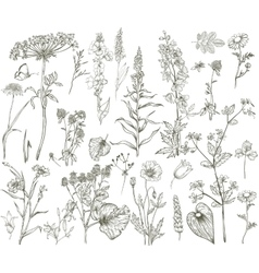 wild floral collection vector image vector image