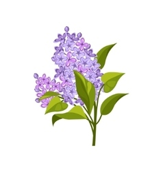 Lilac Hand Drawn Realistic vector image vector image