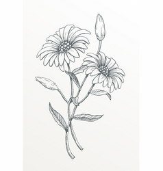 two hand drawn daisies vector image