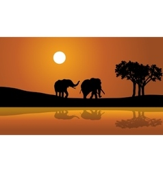 African elephants at sunset africana vector