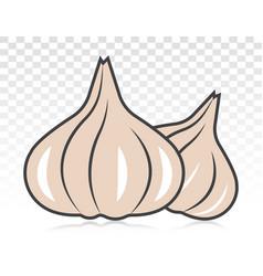 Garlic allium sativum flat colour icon for apps vector