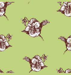 seamless pattern drawn pansies vector image