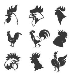 Set of the roosters icons Chicken heads Design vector