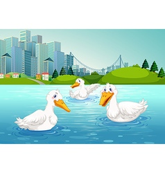 Three ducks swimming in the lake vector image