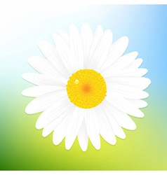 Camomile And Sky vector image vector image