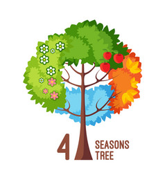 four seasons tree isolated on white background vector image