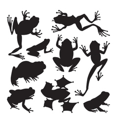 Frog cartoon tropical animals vector