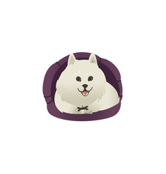 Happy smiling white fluffy dog lying in dog bed vector