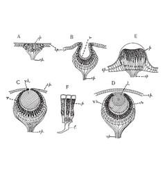 Invertebrate simple eye vintage vector