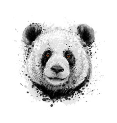 portrait of a panda bear from a splash of vector image